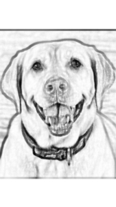New Event - Paint Your Pet Instructor: Mare