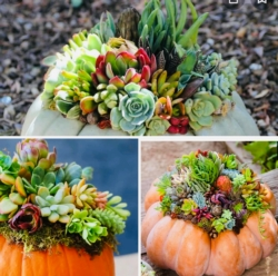 New Event - DIY, you own professional pumpkin and succulent arrangements, Large, medium and small pumpkin included