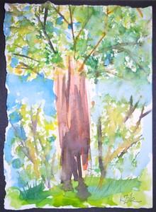 Art for Sale - Woods II