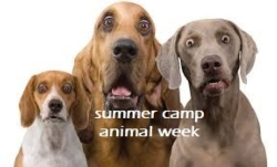 New Event - Summer Camp - Animal Week