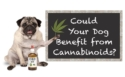 Supplements - Suzie's Organic CBD treats and Tincture