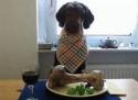 Dog Chews - Naturally Wild Frozen Marrow Bison Bones