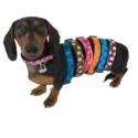 Collars - Walk-E-Woo Polka Dot Collars