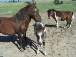 Buy Suzie's Treats, Tinctures & Salve - Suzie's CBD Horse Treats-10mg [click to enlarge]