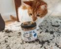 Buy Suzie's Treats, Tinctures & Salve - Suzie's CBD Bites for Cats